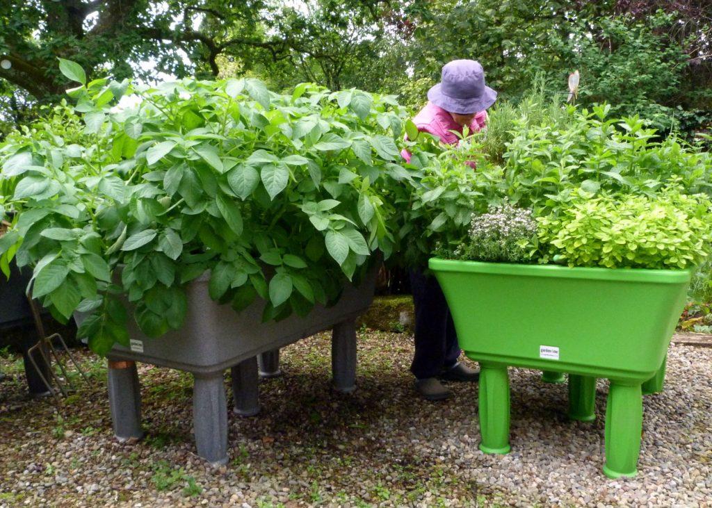 raised planters grow your own veg