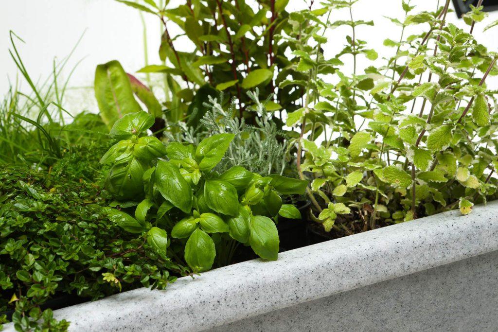 raised planter herbs