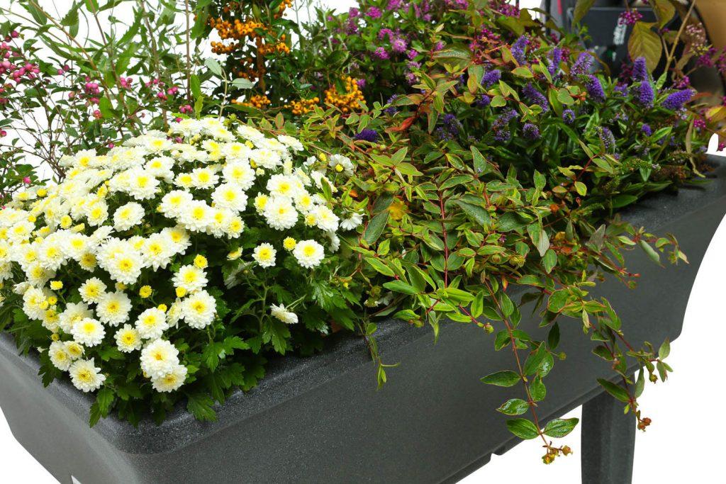 raised garden winter display
